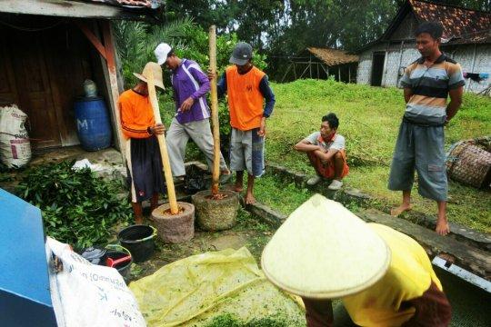 RS berikan kiat cara efektif bersihkan makanan dari pestisida