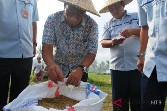 Bulog dukung program korporasi petani berbasis koperasi