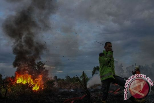 BRG: lahan gambut Riau rawan kebakaran