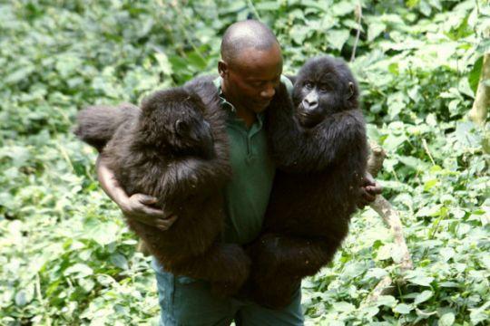 Kongo hentikan aktivitas wisata setelah insiden pembunuhan