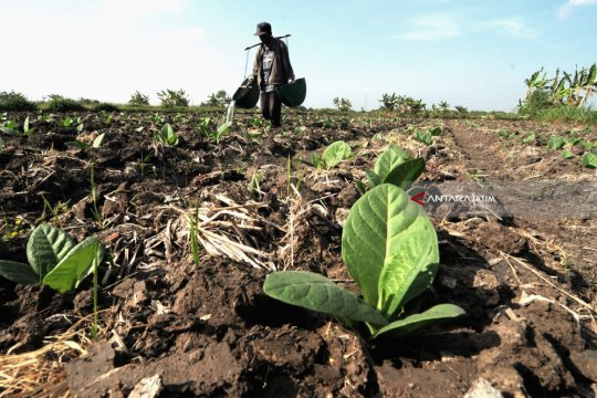 APTI dorong regulasi petani tembakau di Jatim