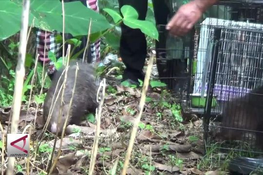Lepas liar satwa di Hutan lindung sekitar Pura