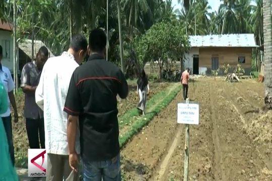 Pemanfaatan dana desa untuk menanam sayuran