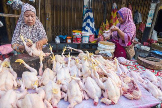Disperindag Banten tekan harga daging ayam