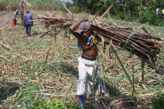 Jokowi janjikan kenaikan harga gula di tingkat petani
