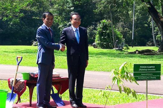 Pohon kamper ditanam Jokowi dan Li