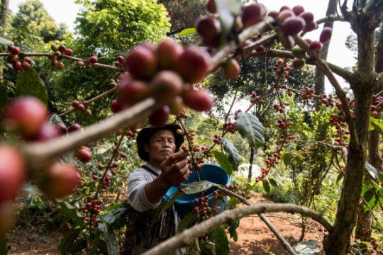 Jawa Barat miliki sekolah kopi pertama di Indonesia