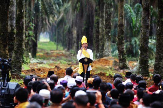 Presiden Resmikan Program Peremajaan Kebun Kelapa Sawit Rakyat