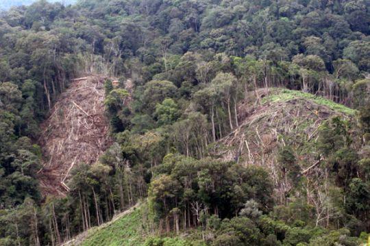 Kerusakan kawasan ekosistem leuser aceh