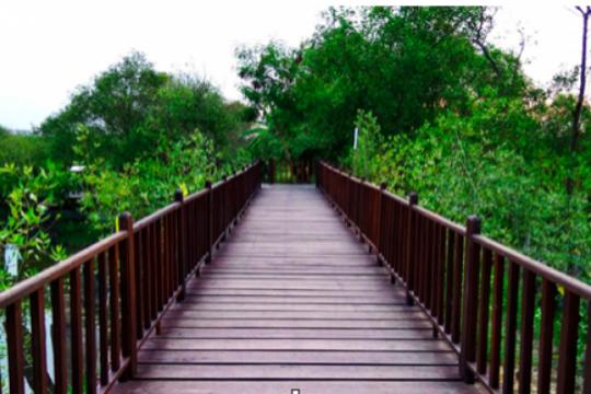 Daun mangrove diolah jadi makanan ringan, bagaimana rasanya?
