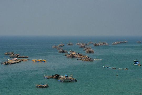 Sertifikasi perikanan harus dimanfaatkan seluruh nelayan