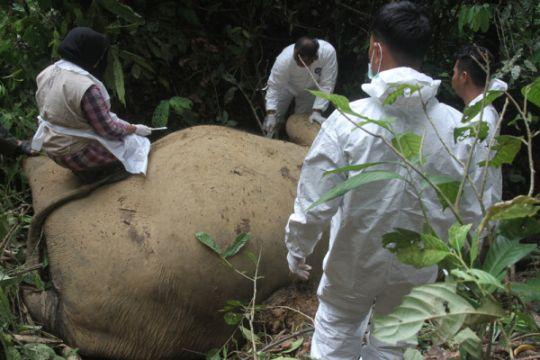 Pengambilan Sampel Gajah Mati