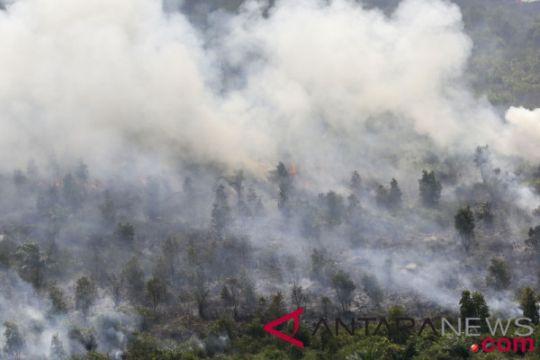 Puluhan hektare lahan sekitar tol Palindra terbakar