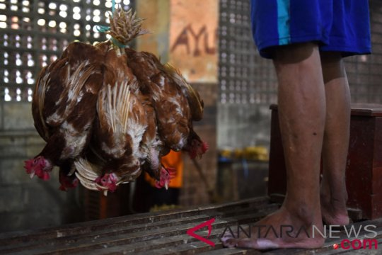 Lapak ayam akan dipindah, 25 ketua RT di Surabaya ancam mundur