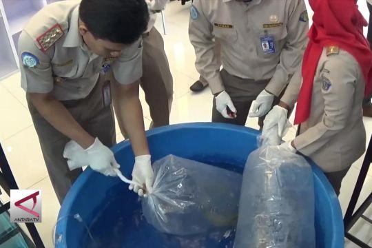 BKIPM Semarang buka posko penyerahan ikan invasif