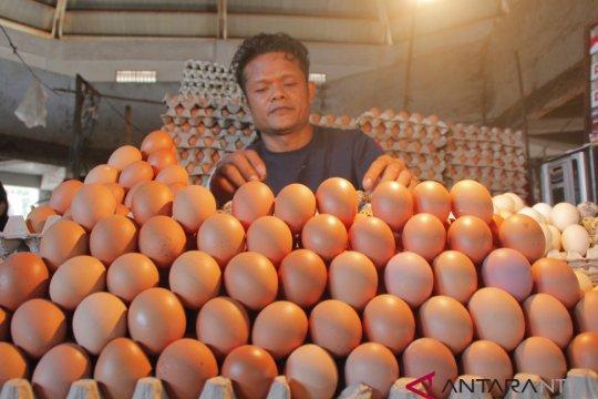 Kementan: stok telur ayam selama Ramadhan surplus