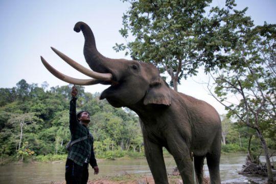 Warga benar-benar ketakutan, gajah kembali masuk permukiman di Aceh