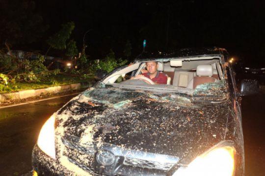 Seorang pengendara tewas tertimpa pohon tumbang