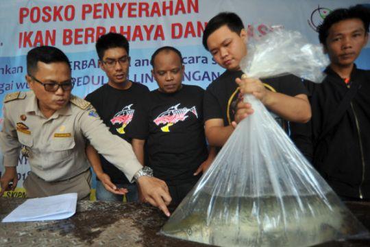 KKP perlu tingkatkan koordinasi awasi ikan invasif