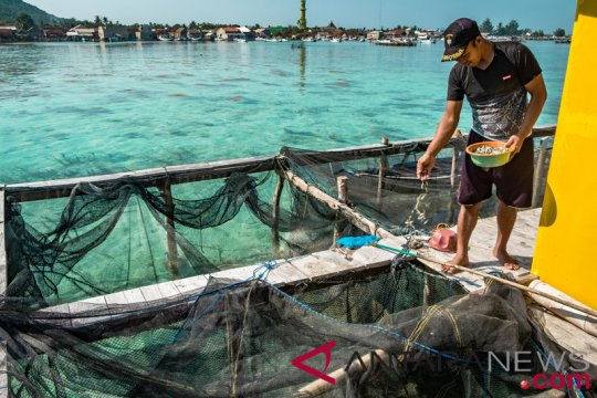 Bertekad tekan pakan ikan impor, KKP lirik palm kernel meal