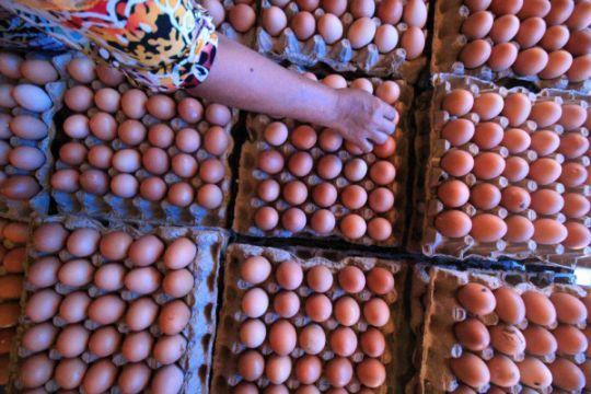 Mendekati Idul Adha harga telur turun di Sukabumi