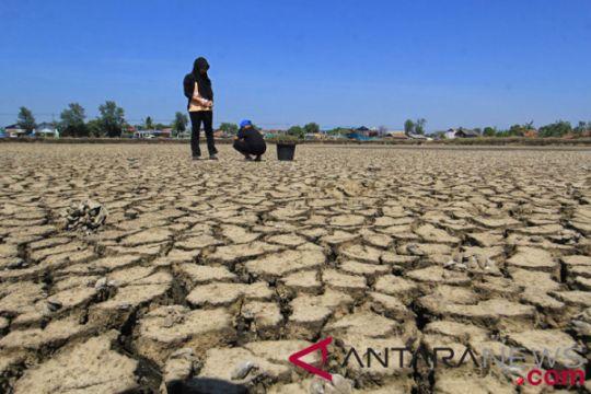 Waspadai musim kering pengaruhi produksi pangan