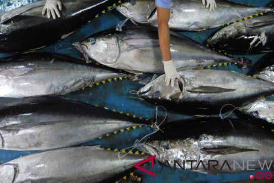 Ekspor ikan tuna Sumatera Barat
