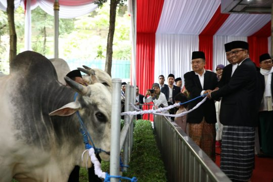 Presiden dan Wapres kurban sapi di Istiqlal