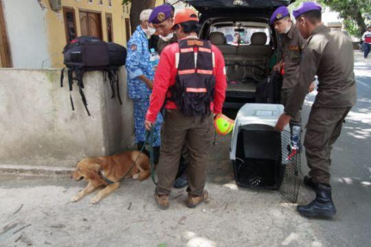 Anjing pelacak bantu temukan korban gempa