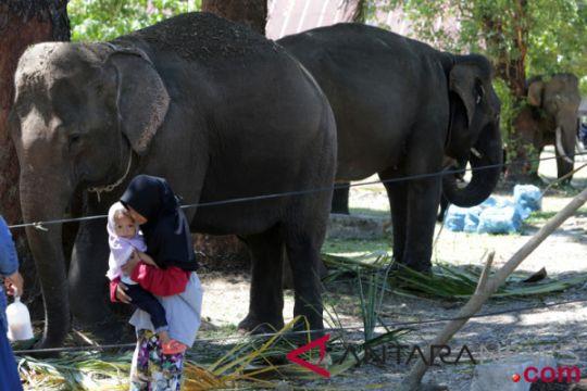 TKI Tulungagung meninggal terinjak gajah di Afrika