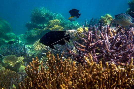 10 spesies baru diidentifikasi dalam ekspedisi laut dalam selatan Jawa
