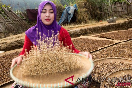 Produksi Kopi Indonesia
