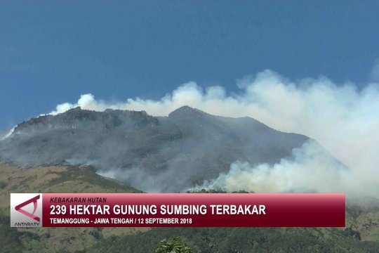239 hektar hutan gunung Sumbing terbakar