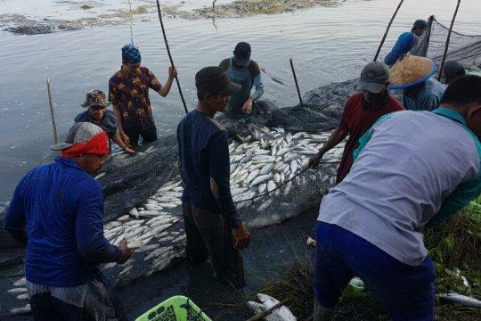 Suhu dingin pengaruhi nafsu makan ikan bandeng tambak