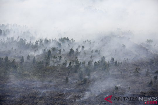 364,8 hektare lahan terbakar di Banjar