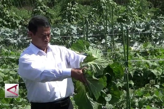 Kementan genjot ekspor hortikultura