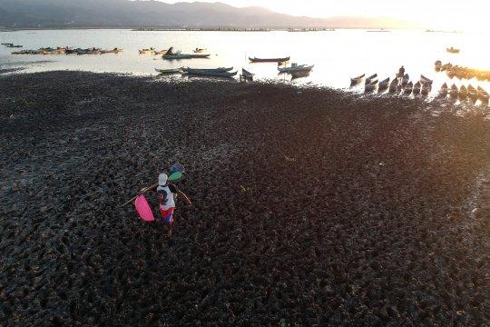 Danau Limboto di Gorontalo masuk program untuk direhabilitasi