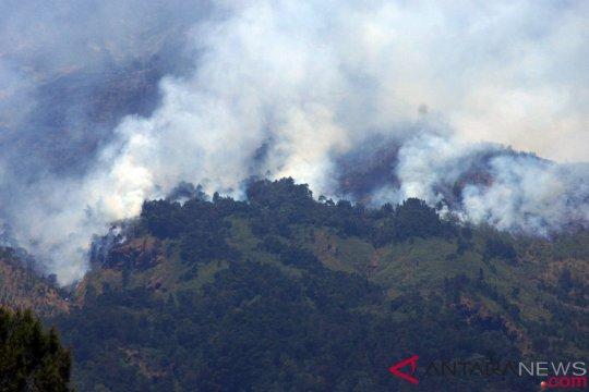 Kebakaran hutan di gunung Sumbing meluas