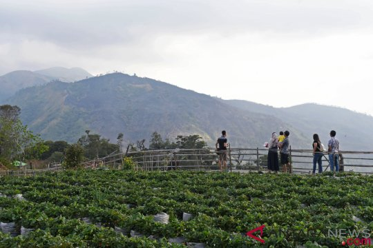 Lereng Lawu di Ngawi longsor rusak pertanian
