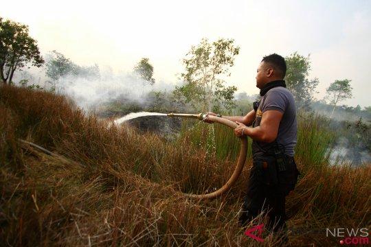 Walhi: rawa gambut bukan lahan tidak produktif