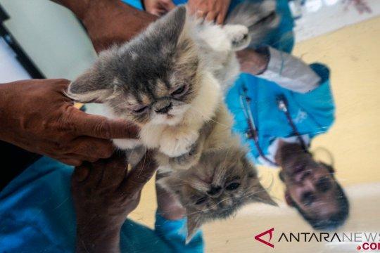 Rabies renggut nyawa empat warga Riau