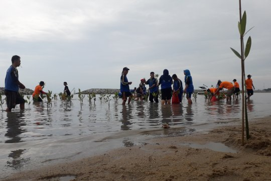 Bangka Tengah akan pulihkan hutan bakau yang rusak akibat tambang
