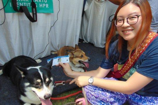 DKI gencar sosialisasi pemasangan mikrocip pada anjing
