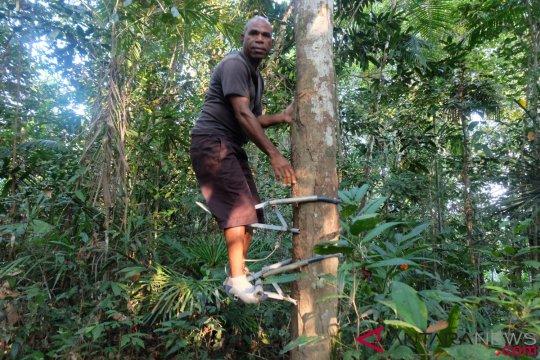 6.324 hektare Hutan Adat sudah berstatus hukum