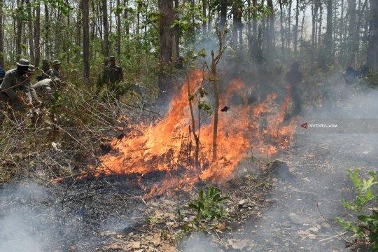 Kasus kebakaran di Kabupaten Madiun-Jatim didominasi dekat hutan