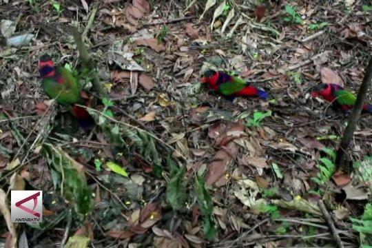 BKSDA Papua lepas liarkan puluhan burung dilindungi
