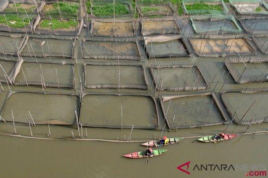 Dinas perikanan Palembang manfaatkan ekskavator kembangkan perikanan