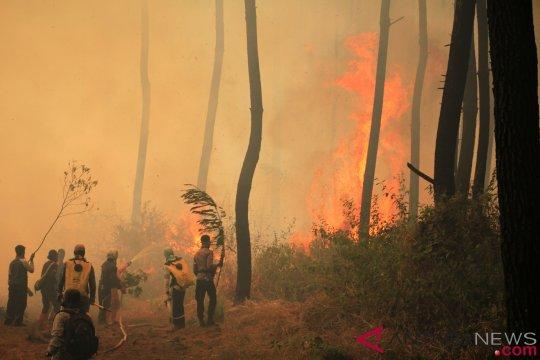 Menteri LHK: api di hutan Ciremai sulit dipadamkan