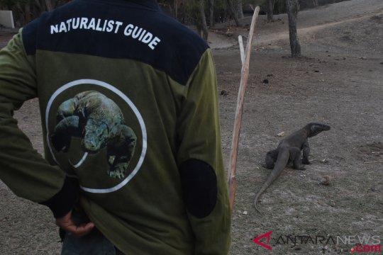 KLHK: Penutupan kawasan Taman Nasional Komodo masih dalam pembahasan
