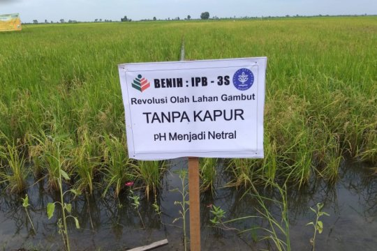 Produsen pupuk siapkan teknologi peningkatan produksi padi di lahan rawa